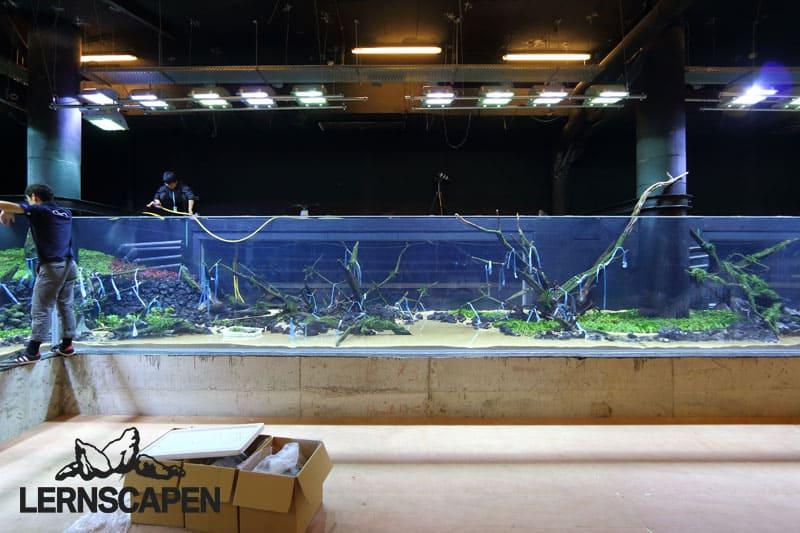 Forests Underwater - Das größte Naturaquarium der Welt 3