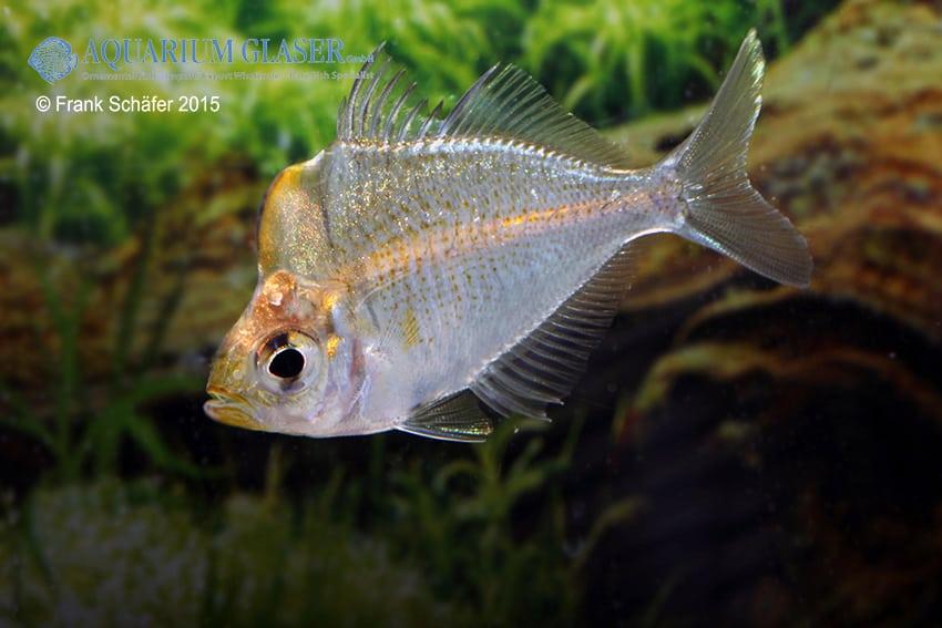 Verbreitungskarte und Fischentwicklung in der Erdgeschichte 55