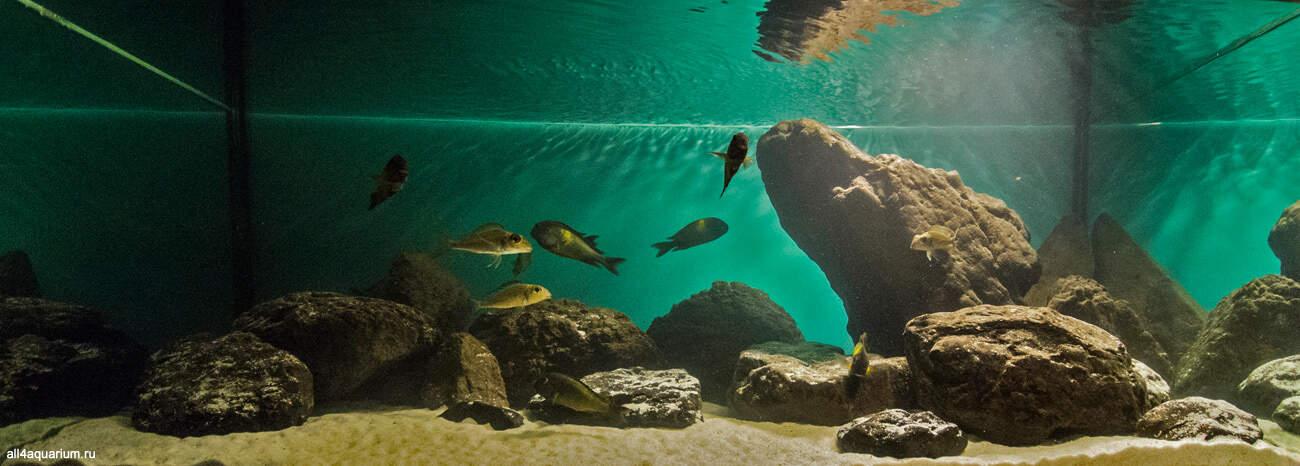 Biotope Aquarium Design Contest 2015 - Qualifying Ergebnisse 11