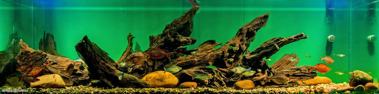 Biotope Aquarium Design Contest 2015 - Qualifying Ergebnisse 24