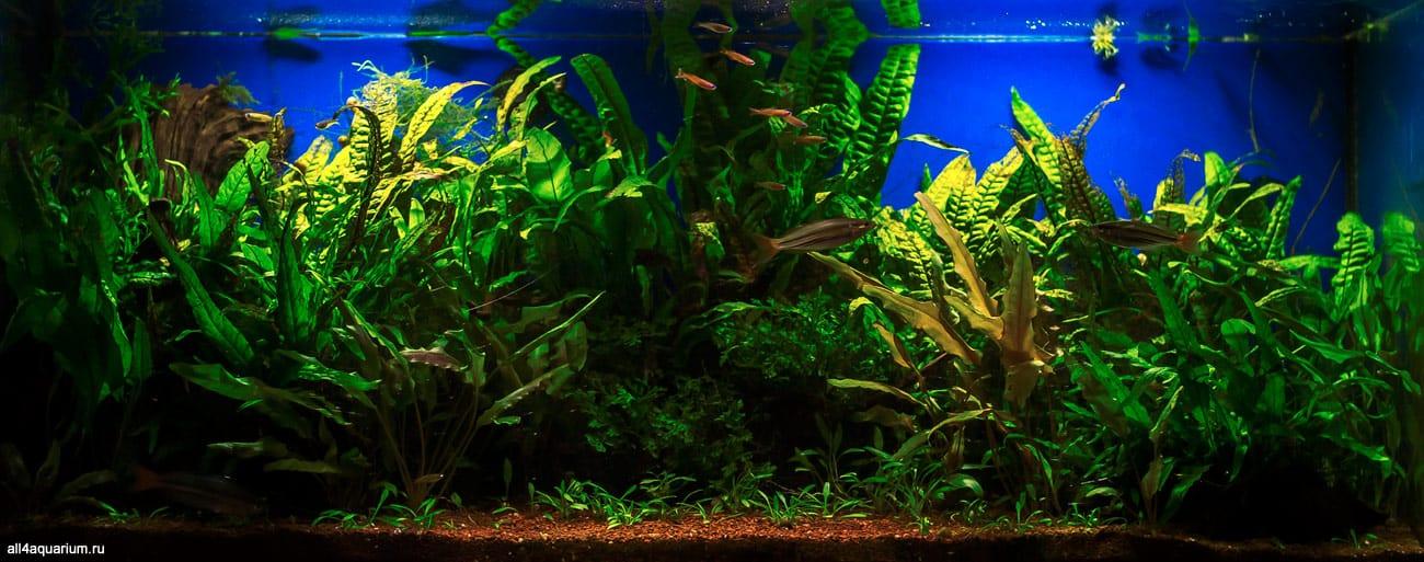 Biotope Aquarium Design Contest 2015 - Qualifying Ergebnisse 25