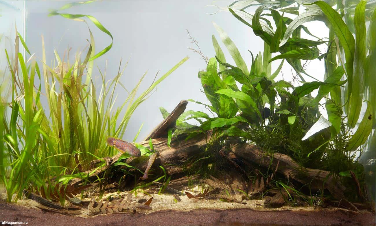 Biotope Aquarium Design Contest 2015 - Qualifying Ergebnisse 23