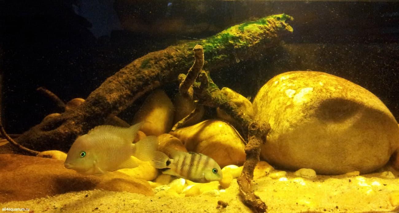 Biotope Aquarium Design Contest 2015 - Qualifying Ergebnisse 4
