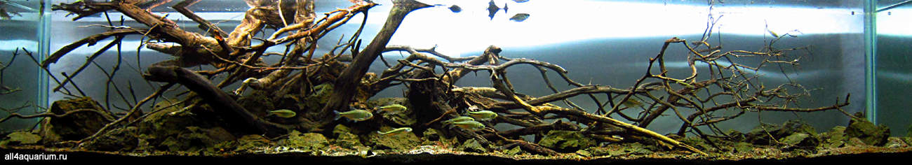Biotope Aquarium Design Contest 2015 - Qualifying Ergebnisse 2