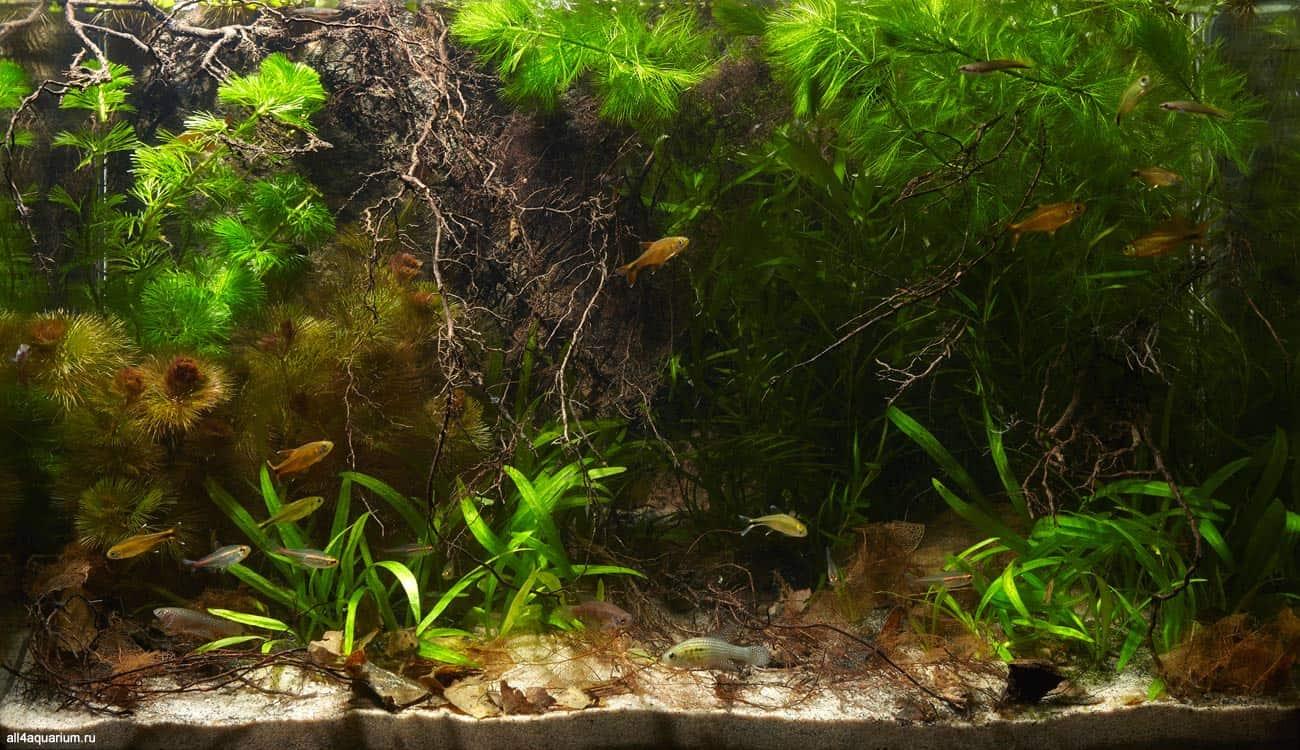 Biotope Aquarium Design Contest 2015 - Qualifying Ergebnisse 7