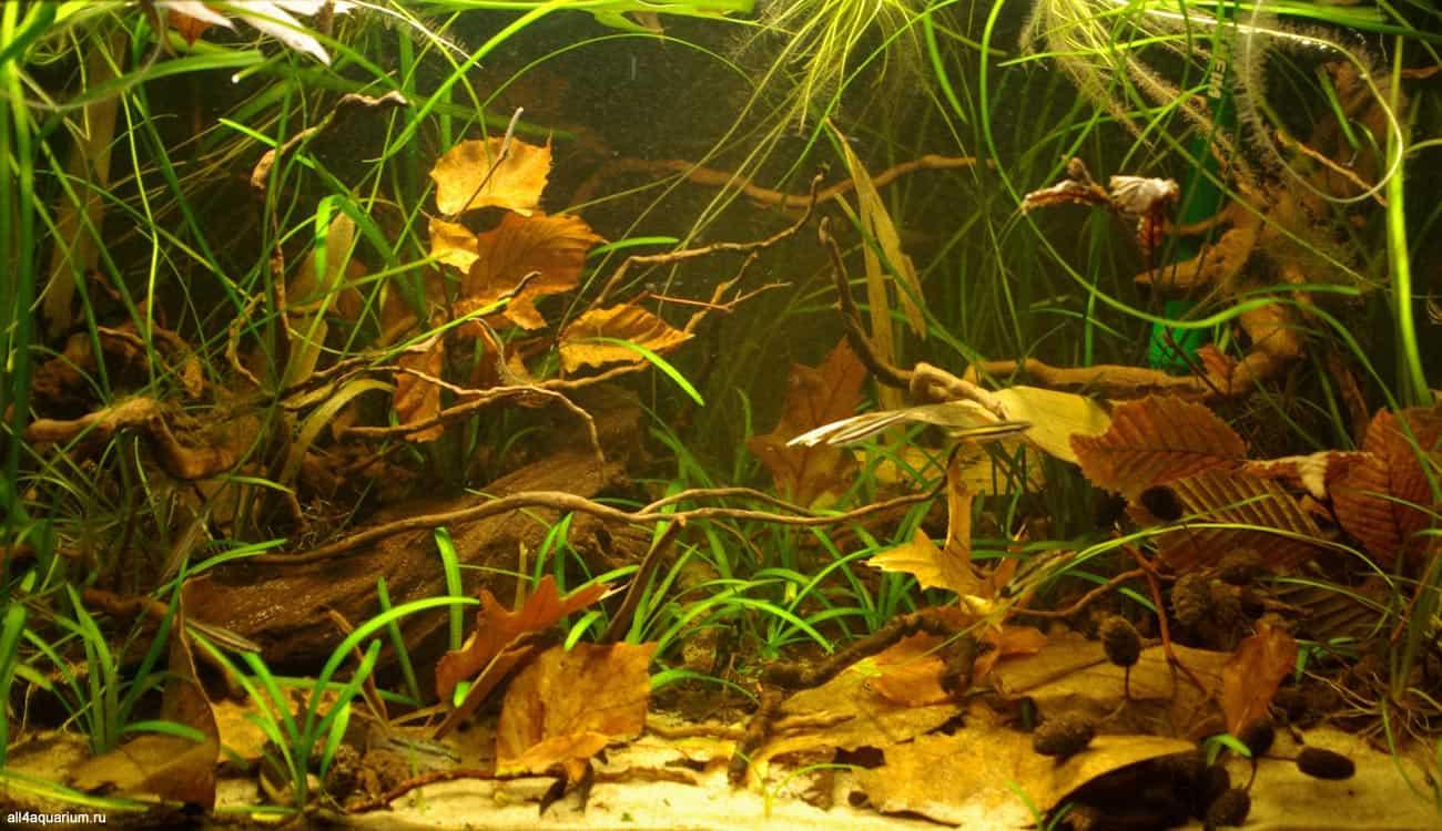 Biotope Aquarium Design Contest 2015 - Qualifying Ergebnisse 10