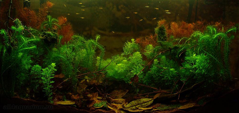 Biotope Aquarium Design Contest 2015 – Das Finale 9