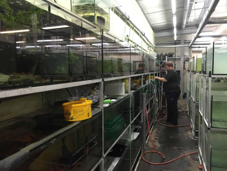Wie sieht es in einem Zierfischgroßhandel aus - my-fish zu Besuch bei aqua-global 4