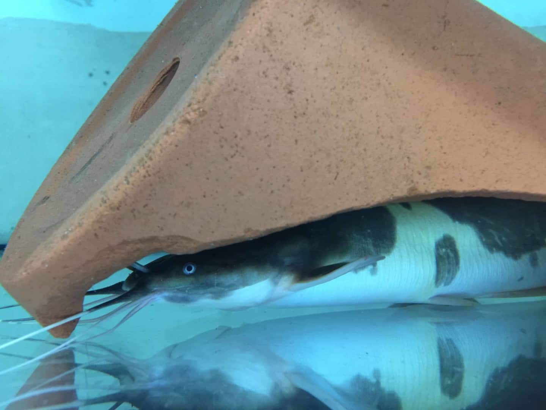 Wie sieht es in einem Zierfischgroßhandel aus - my-fish zu Besuch bei aqua-global 7