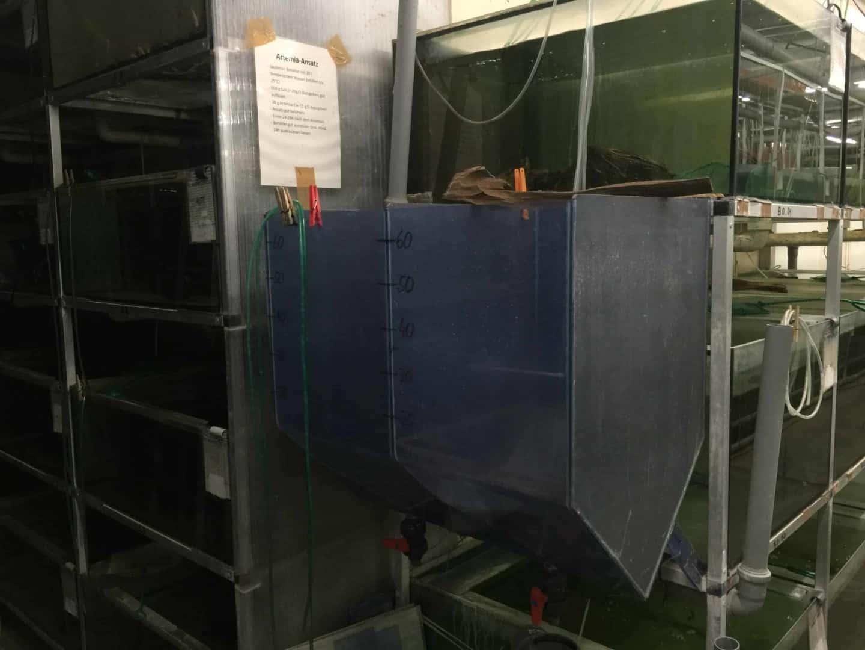 Wie sieht es in einem Zierfischgroßhandel aus - my-fish zu Besuch bei aqua-global 5