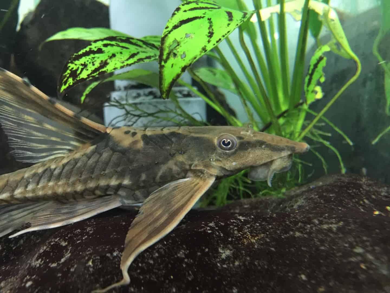 Wie sieht es in einem Zierfischgroßhandel aus - my-fish zu Besuch bei aqua-global 9