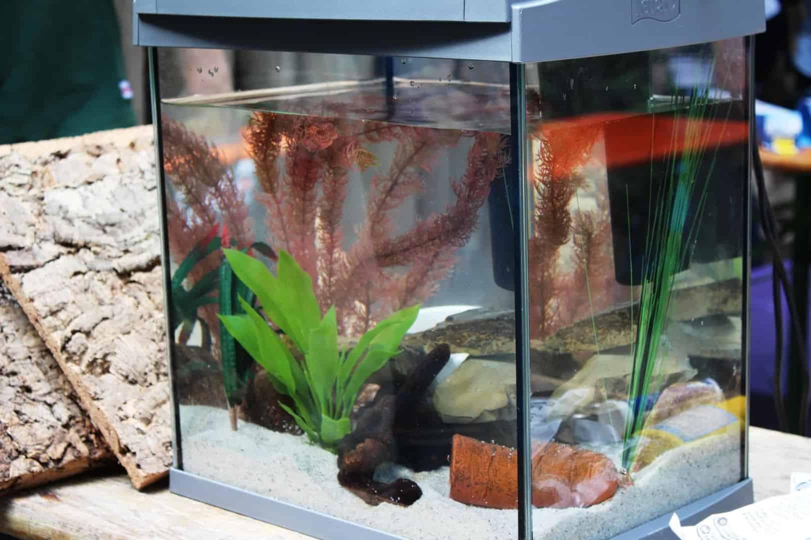 Schon gewusst? Langjährige Partnerschaft zwischen Tetra und Zoo Osnabrück 2