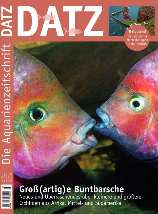 Datz Cover