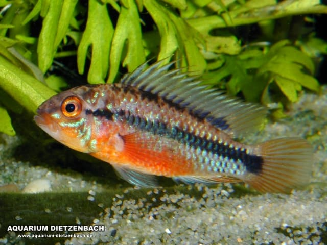Der faszinierende Körperbau der Fische 13