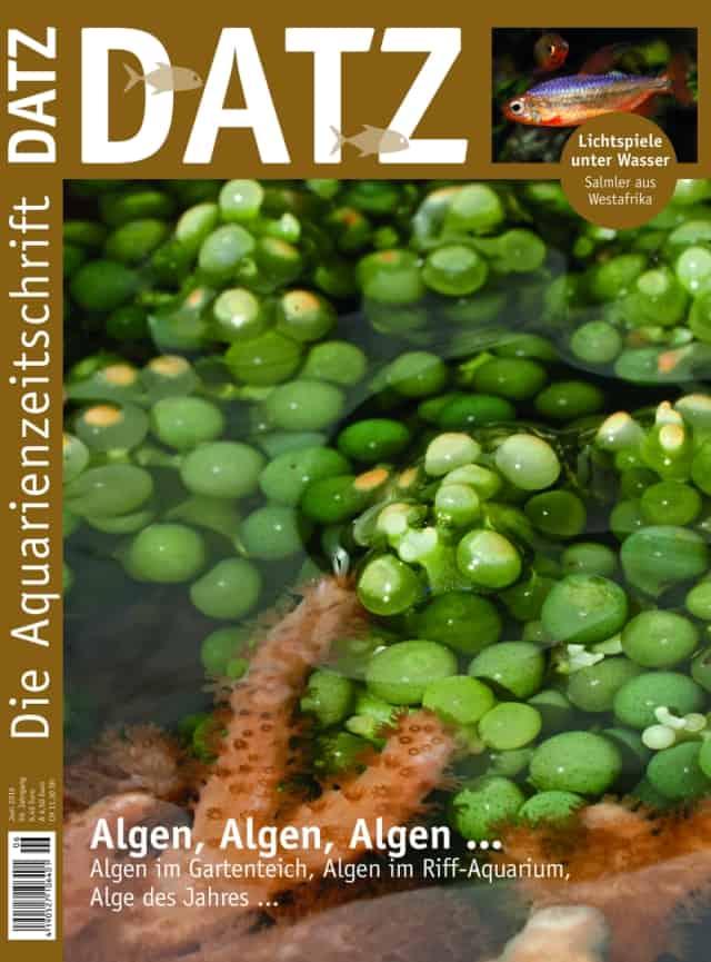 6/2016 Datz Cover