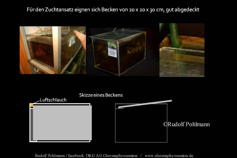 Zuchtansatzbecken 20x30x20