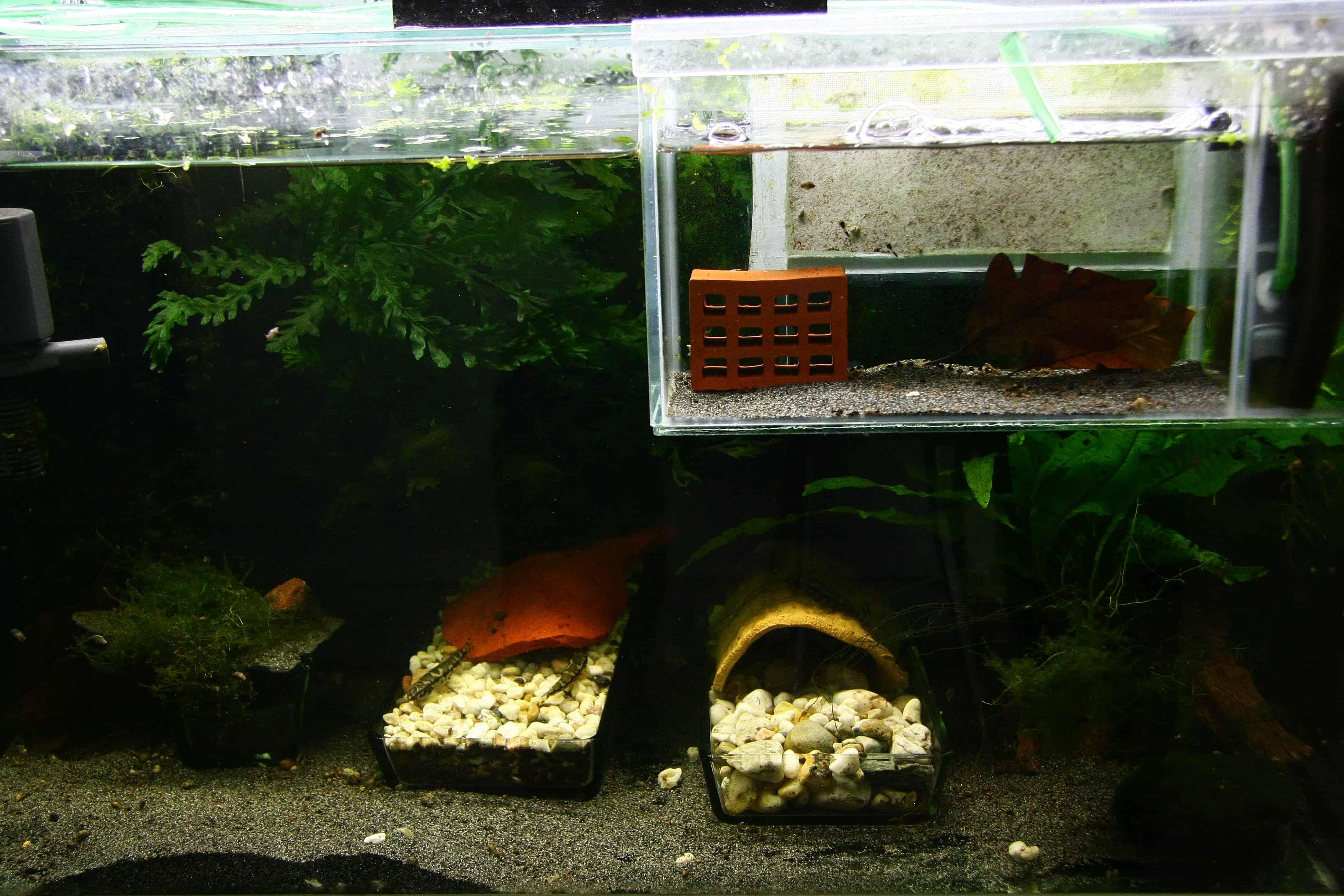 Zuchtaquarium mit Sandboden, Kiesschalen und Einhängekasten für Jungtiere