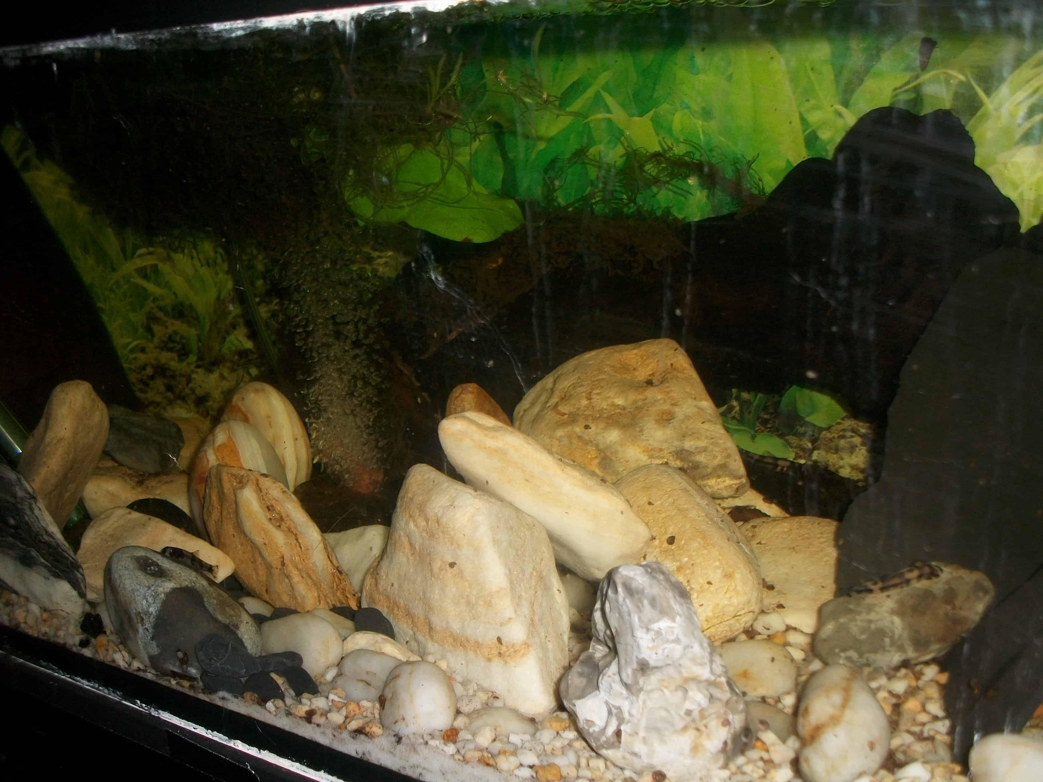 Blick ins Aquarium