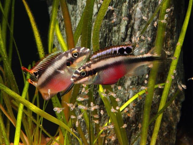 Welche Aquarientypen gibt es? 1