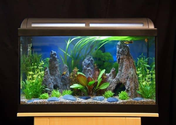 Das aquarium allein zu haus wenn fische sturmfrei haben for Fische aquarium