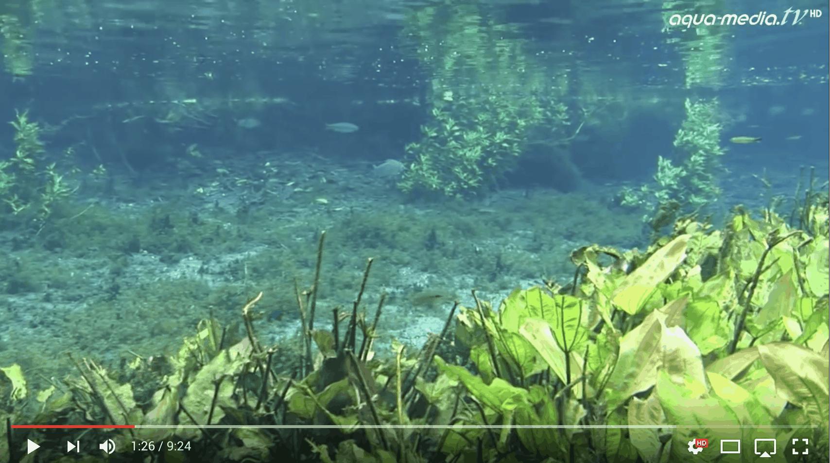 Das Biotop Aquarium Quelle: YouTube / Aqua-Media.TV