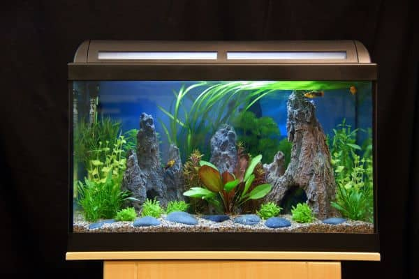 fische im farbenrausch aquarien richtig beleuchten my fish. Black Bedroom Furniture Sets. Home Design Ideas