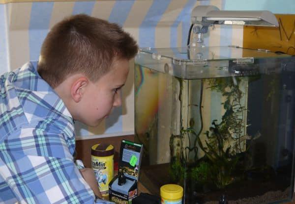 Foto: FLH. - Auch bei kleinen Aquarien, sogenannten Nano-Becken, ist die richtige Beleuchtung wichtig.