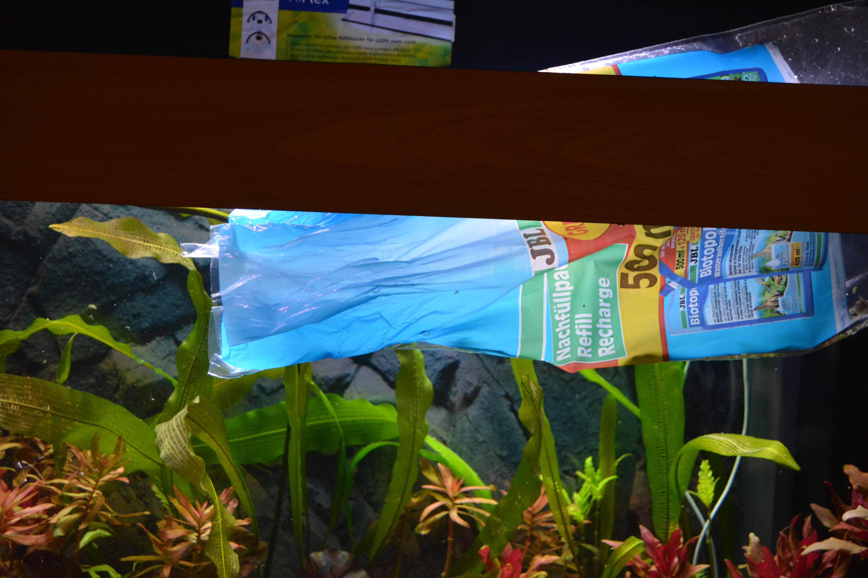 Einzug ins aquarium fische richtig einsetzen my fish for Fische aquarium