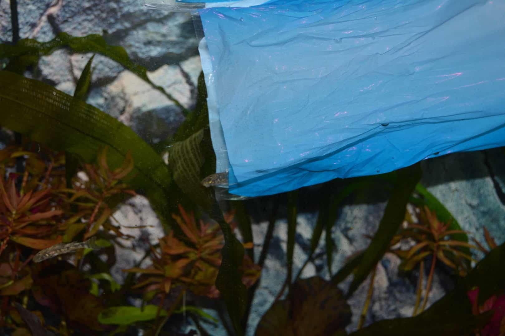 Einzug ins Aquarium: Fische richtig einsetzen 4
