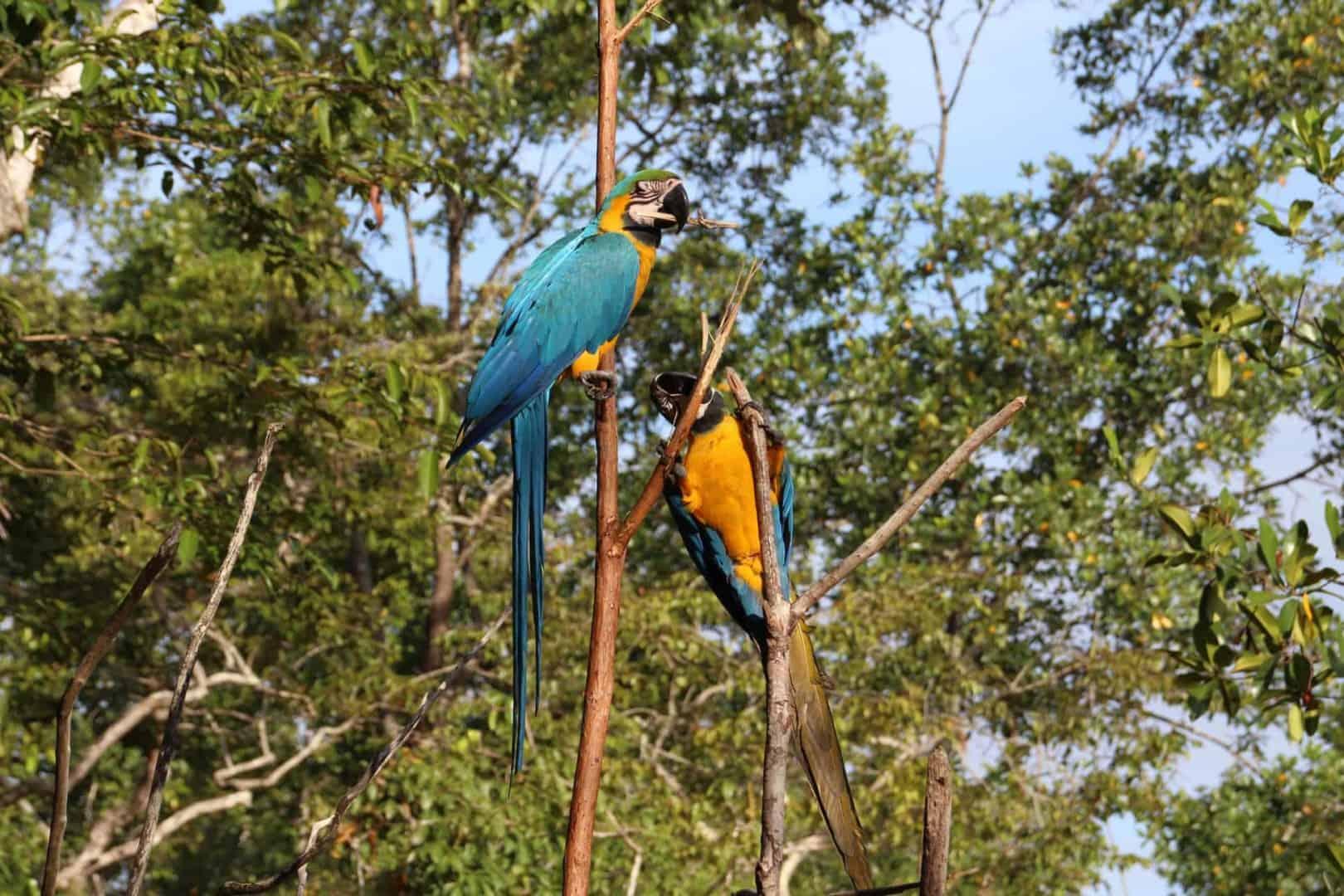 Expedition nach Venezuela: Orinoco Delta und Canaima Teil 1/3 13