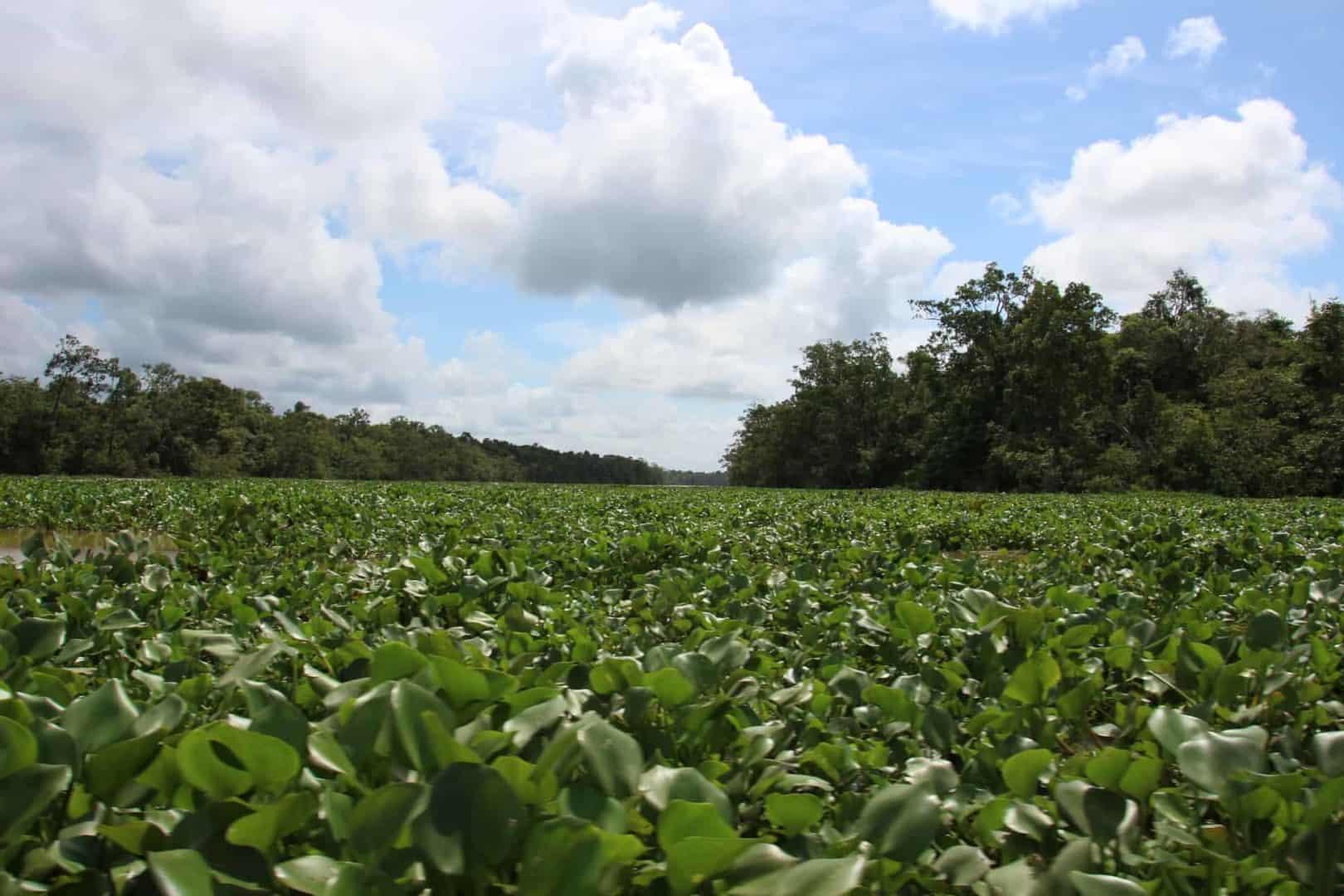 Podcast Episode #100: Expedition zum Orinoco-Delta in Venezuela (Uwe Hartmann) 8