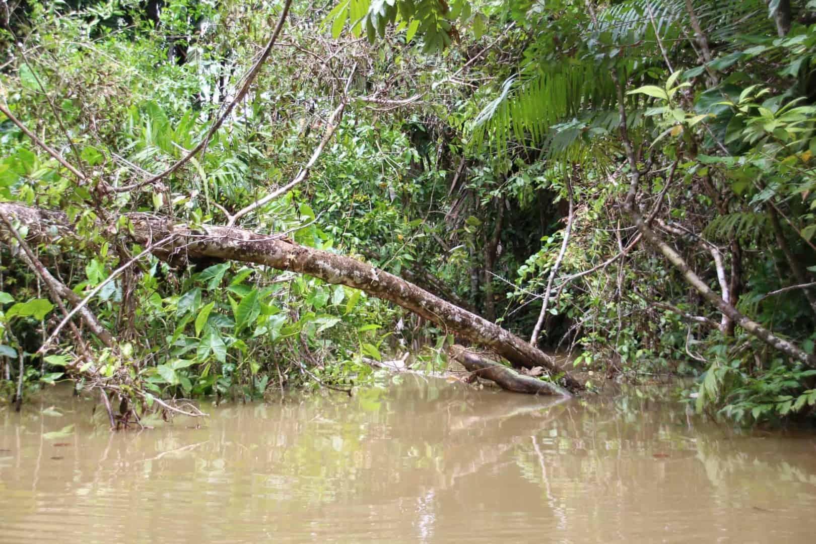 Das Orinoco Delta - Biotope und die Indianer 1