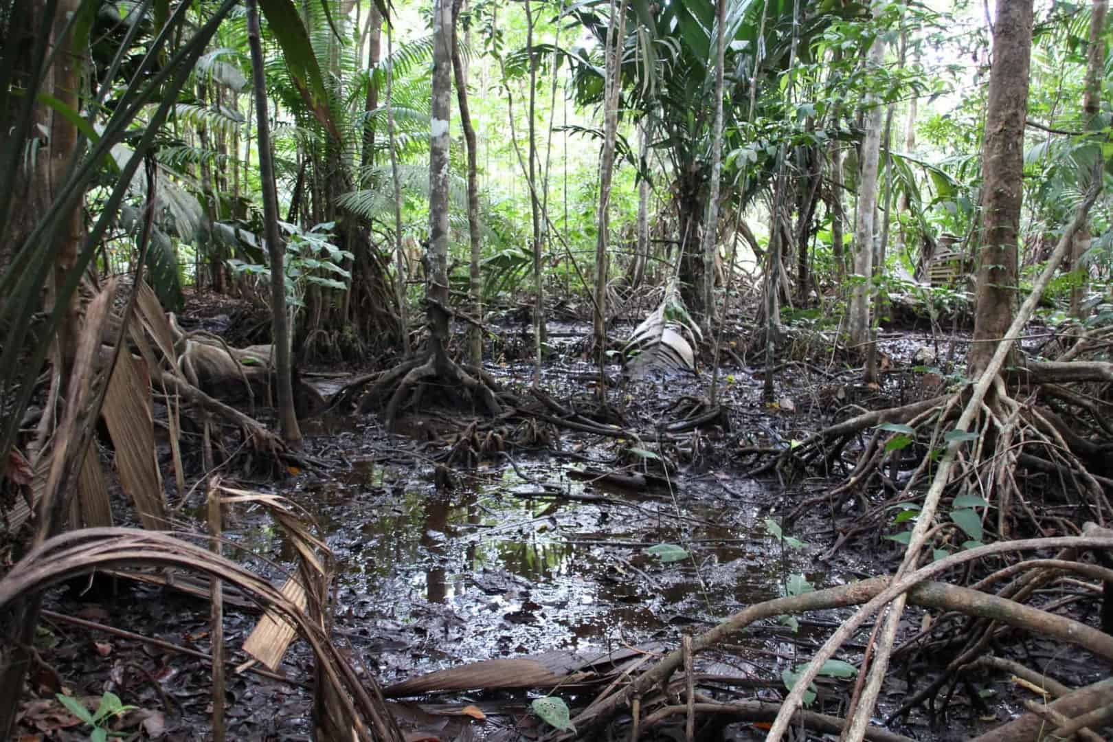 Expedition nach Venezuela: Orinoco Delta und Canaima Teil 2/3 3