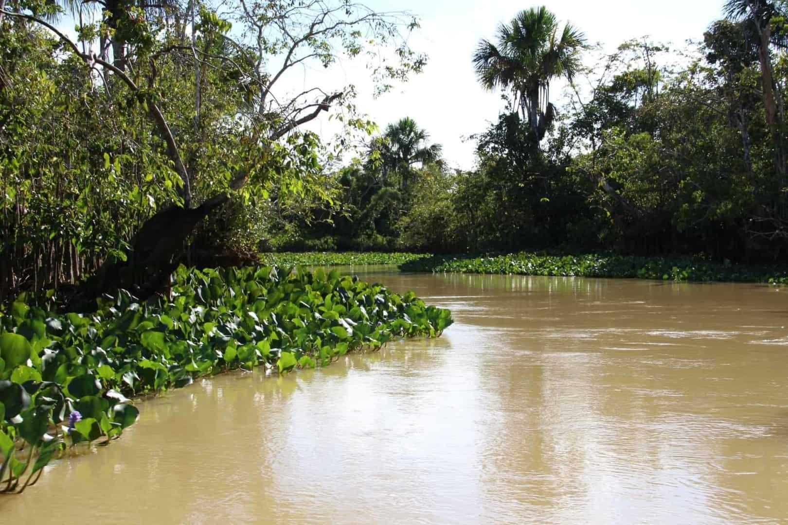 Expedition nach Venezuela: Orinoco Delta und Canaima Teil 2/3 11