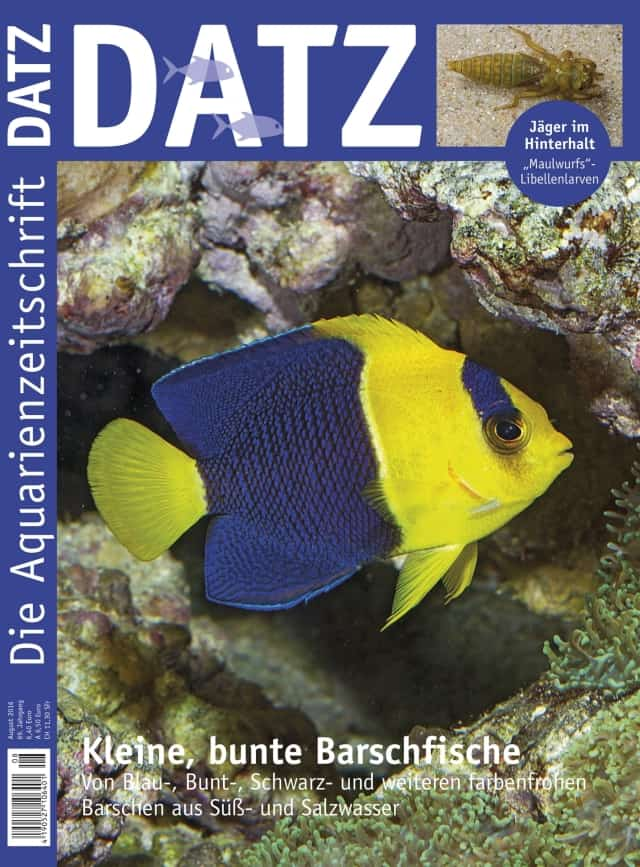 Datz 8/2016