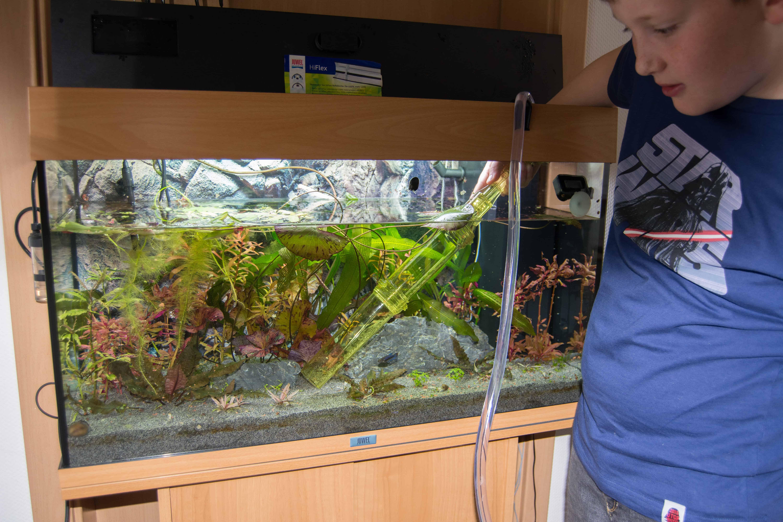 so viel zeit muss sein die pflege deines aquariums my fish. Black Bedroom Furniture Sets. Home Design Ideas