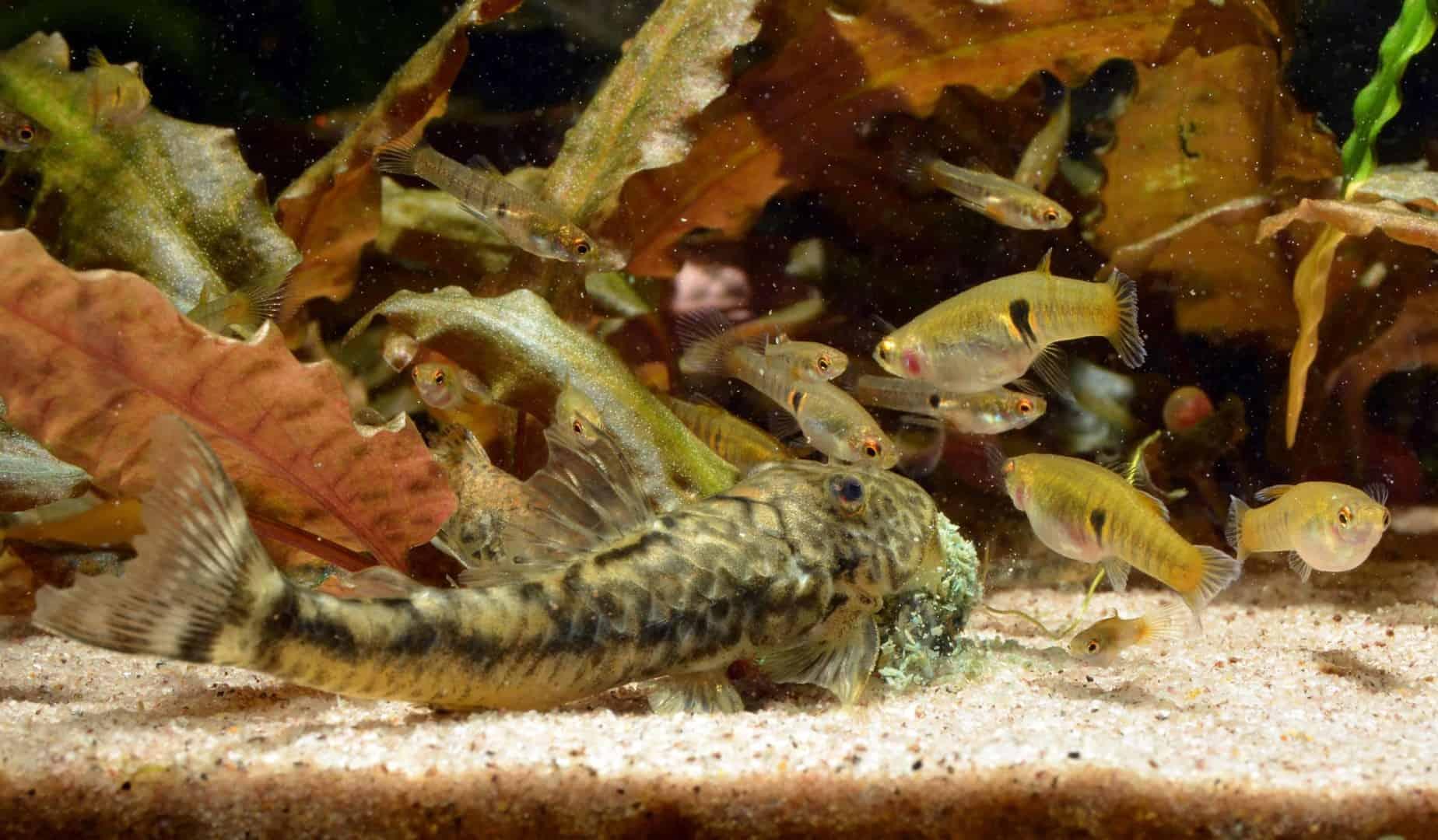 So viel Zeit muss sein – die Pflege deines Aquariums 1