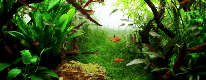 Kids Aquarium Tropica
