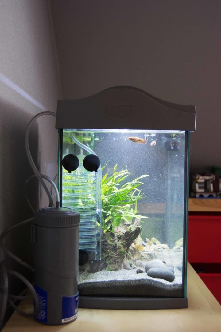 Pflanzenpflege - Dein kleiner Unterwassergarten 4