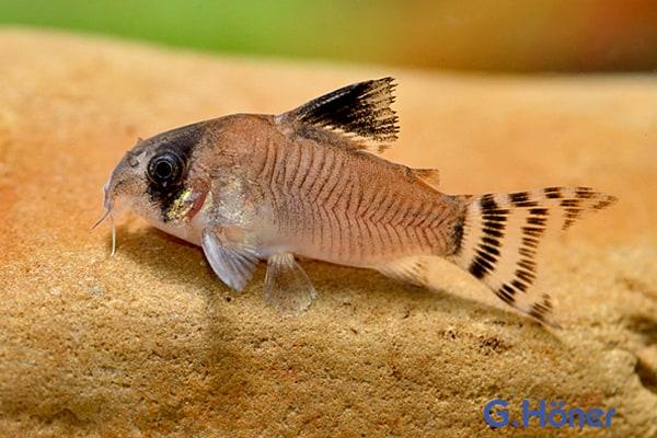Der faszinierende Körperbau der Fische 11