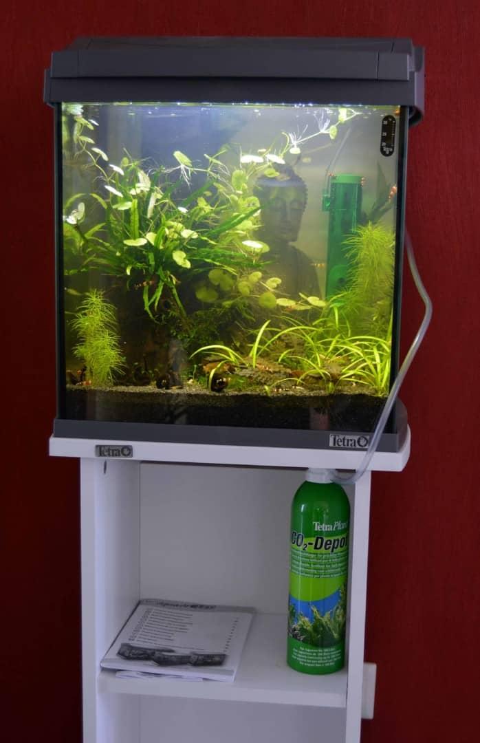Pflanzenpflege - Dein kleiner Unterwassergarten 3