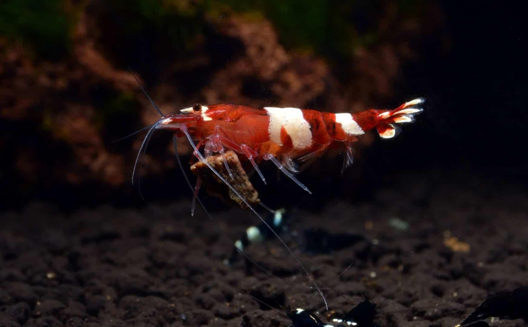 Die Bewohner deines Aquariums 5