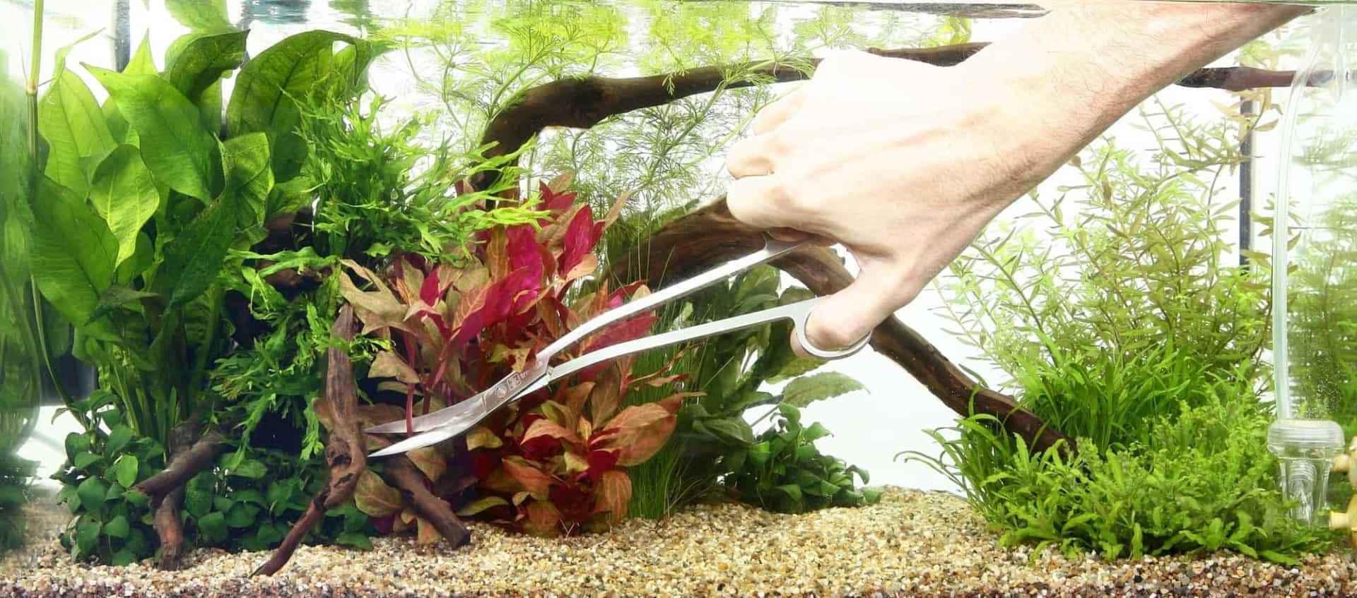 Kids Aquarium Tropica Kontraste