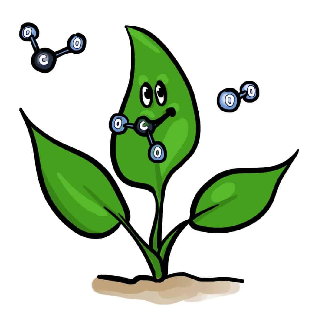 Pflanze_CO2