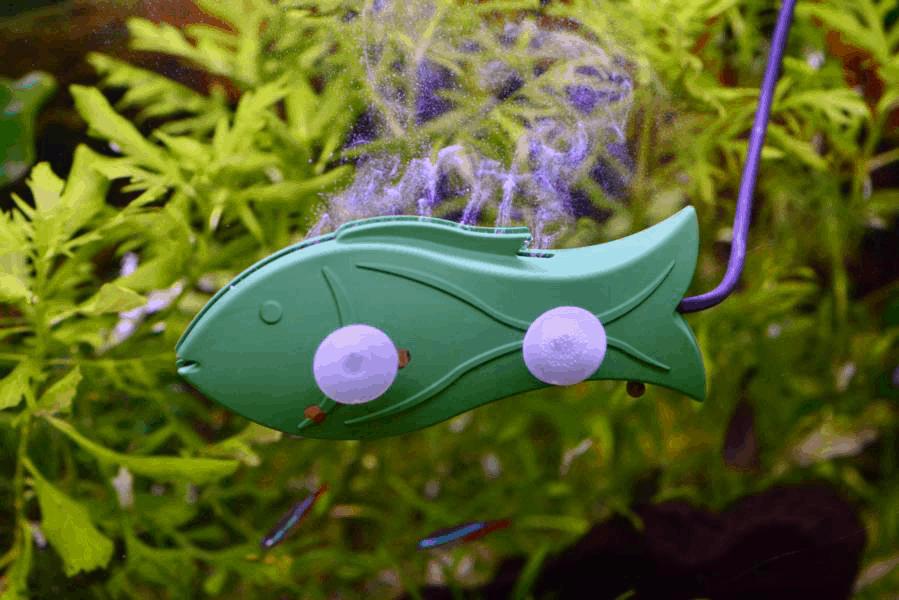 aquarium-fresher-nahaufnahme