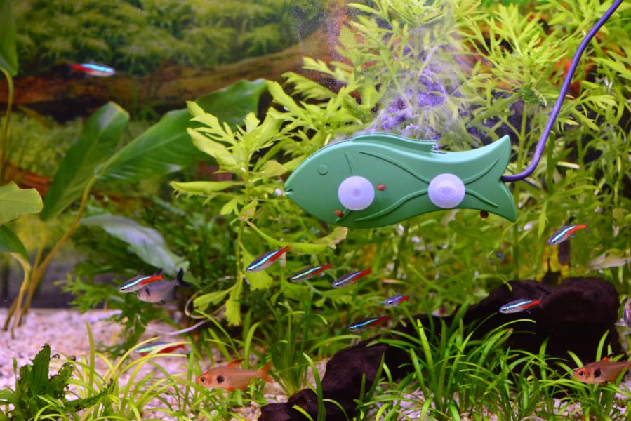interview quereinsteiger in der aquaristik wie eine produktidee realit t wurde my fish. Black Bedroom Furniture Sets. Home Design Ideas