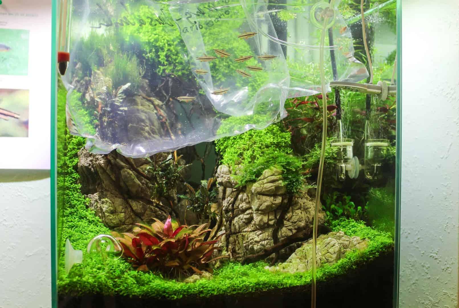 Ein Kita Aquarium de luxe 6