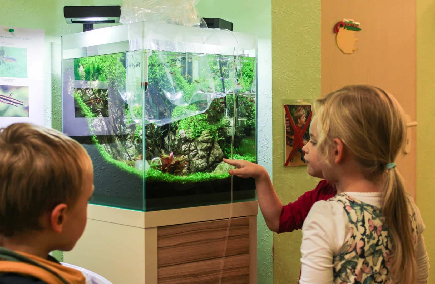 Ein Kita Aquarium de luxe 7