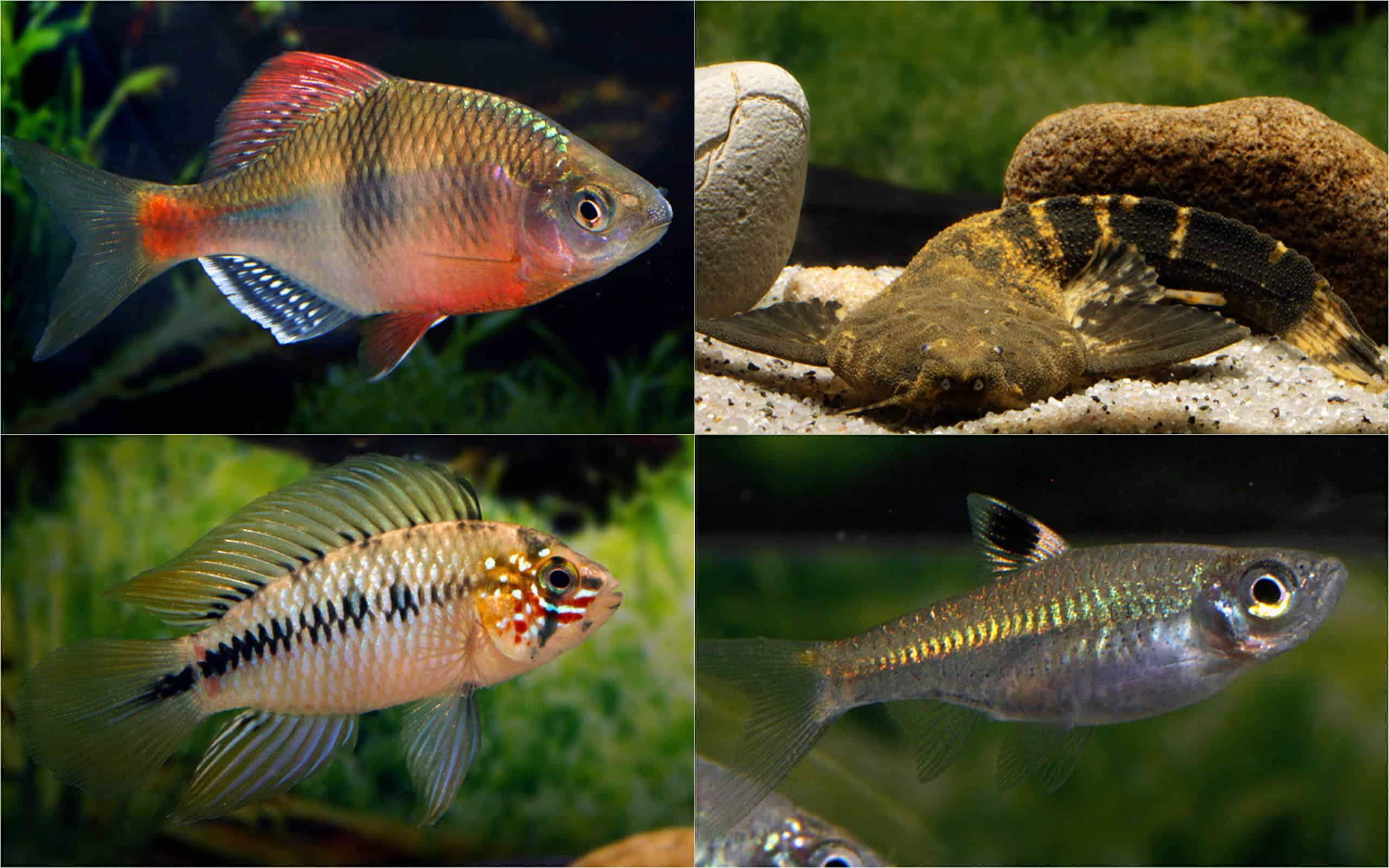 Quelle: Frank Schäfer - Aquarium Glaser