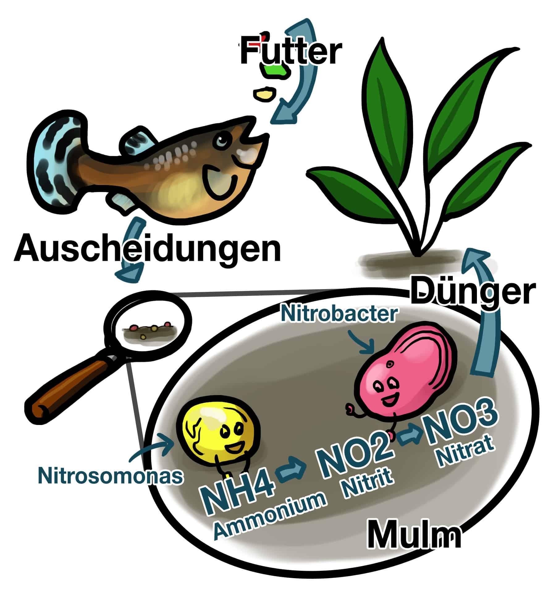 Pflanzenrolle Stickstoffkette Kids